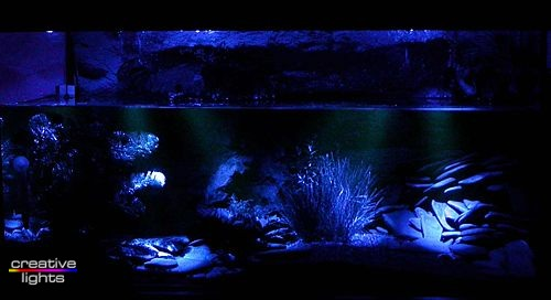 aquarium mondlicht komplettset led spot 6 fach. Black Bedroom Furniture Sets. Home Design Ideas